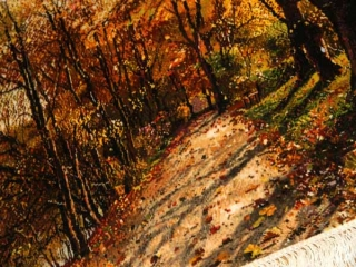 ペルシャ絨毯タペストリータブリーズ自然風景49108