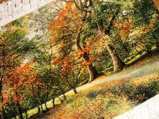オータムの風景でペルシャ手織り絨毯50111